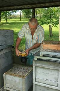 Méhek vizsgálata 2.