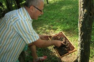 Méhek vizsgálata 3.