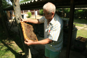 Méhek vizsgálata 4.